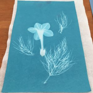 Festival vegan learns to cyanotype print